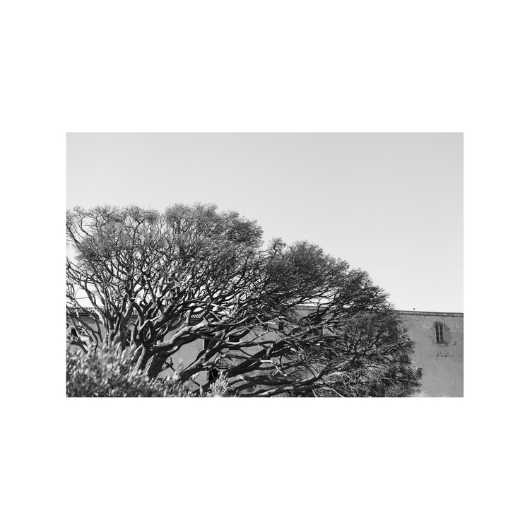 Working, newphotoproject, 'atreecalledhome' - pascalehustingsphotography | ello