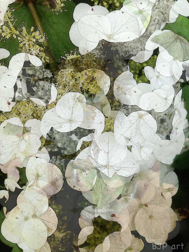 Blütenmix  - BJP_art, Lichtspurkomposition - bringfried | ello