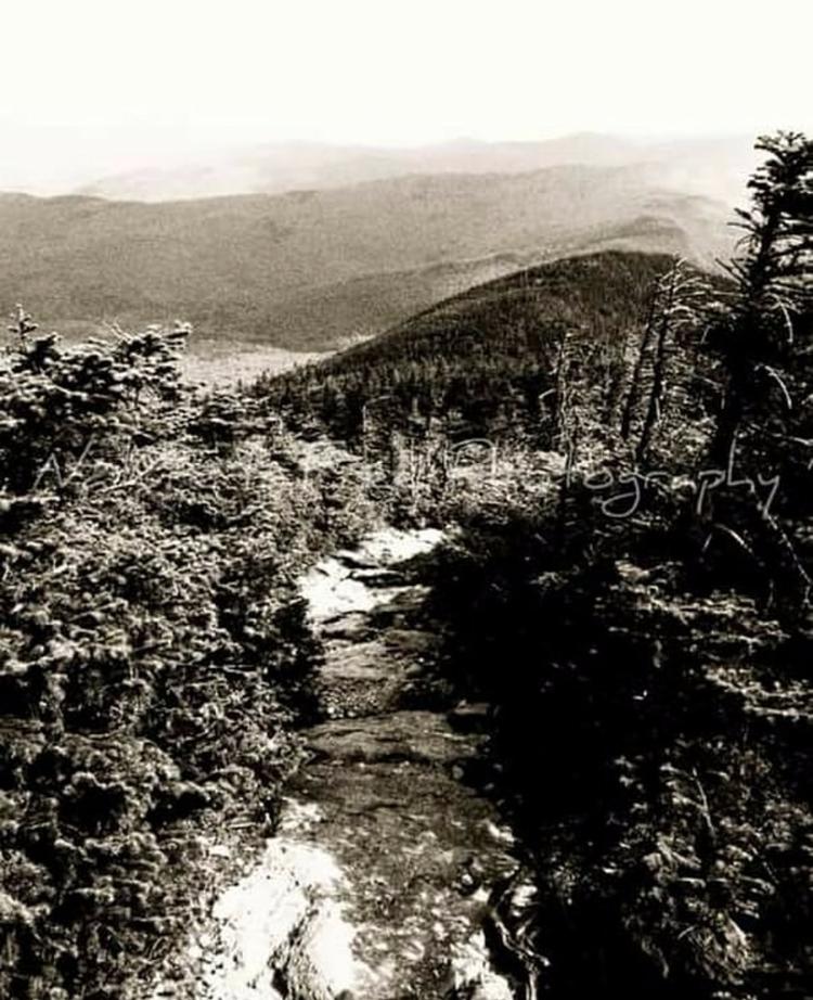 "walk wild."" ~Jon Krakauer - intothewild - natureisfree | ello"