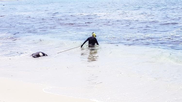 Charon La Jolla - lajolla, sandiego - fosterious   ello