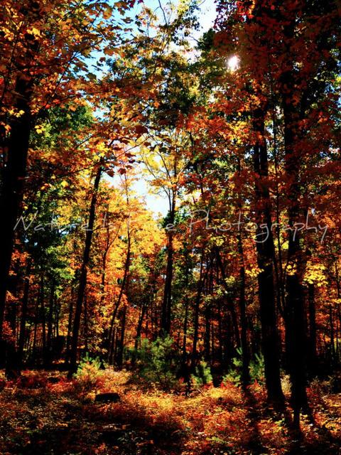 true colors beautiful rainbow - forest - natureisfree | ello