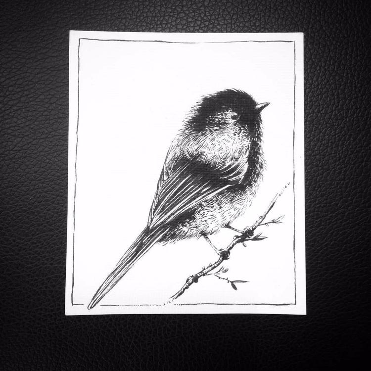 Poecile atricapillus - bird, songbird - leonardofrey | ello