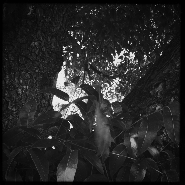 Branches Growing Trunk Apps - mikefl99 - mikefl99 | ello