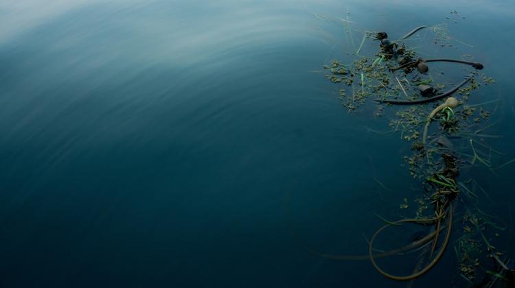 photography, sonyphotography - bananabreezebees | ello