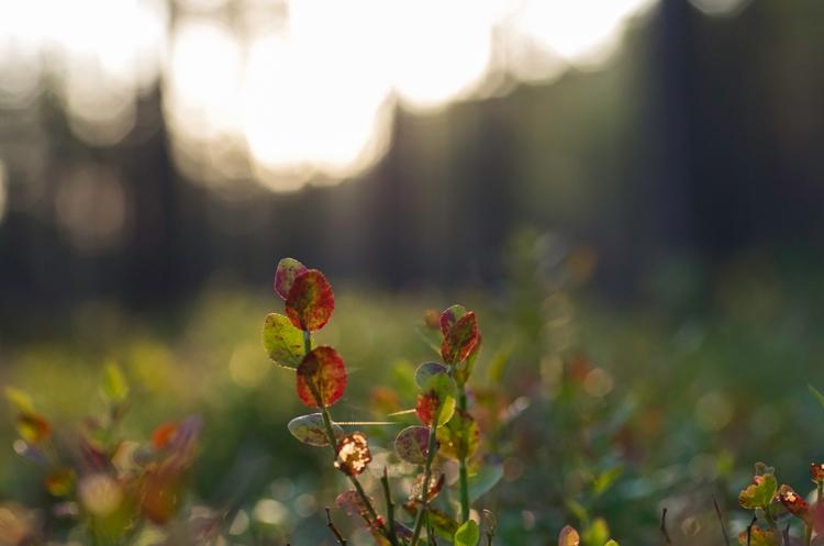 sunrise. Pentax ISO 1250 1/1000 - jaan_puravik | ello