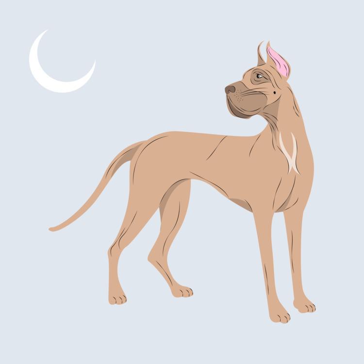 Great Dane Digital 2017 - illustration - xeezles | ello