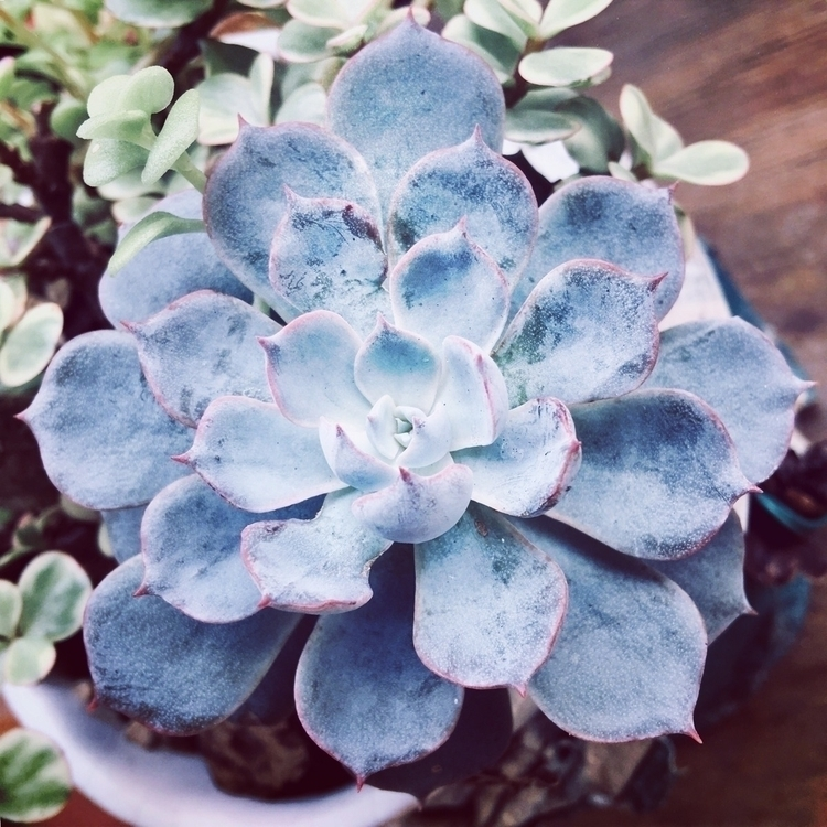 plant, houseleek, congratscafe - mathmac | ello