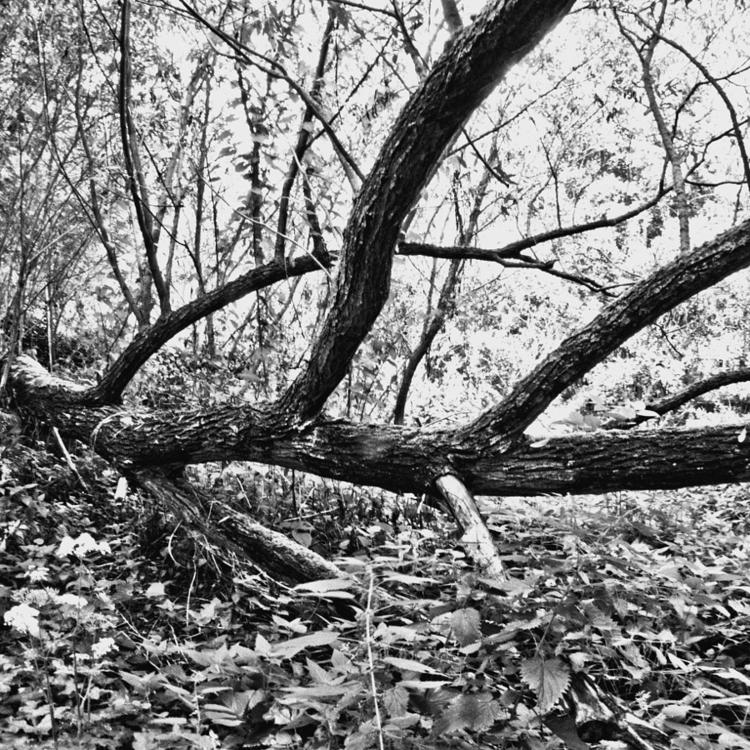 Vogelzang - natural reserve - 001 - studio_zamenhof | ello