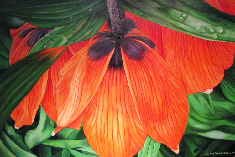 Fritillaria Imperialis. Oil can - nancyht | ello