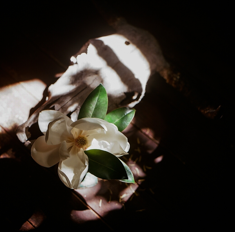 skull, flower, magnolia, shotonfilm - teetonka   ello