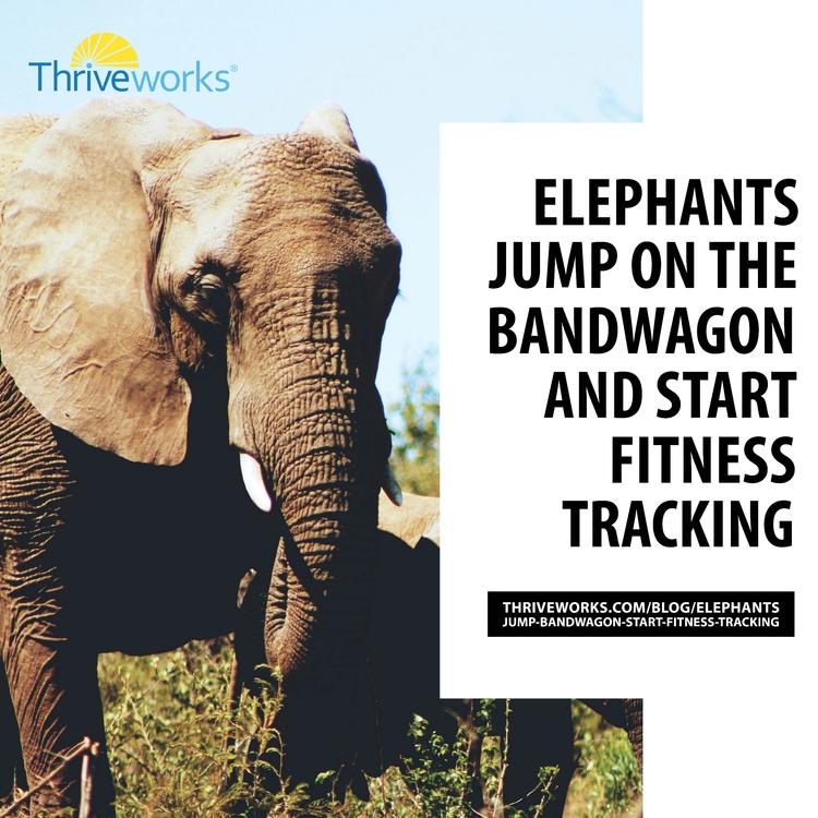 Elephants Jump Bandwagon Start  - anthonycentore | ello