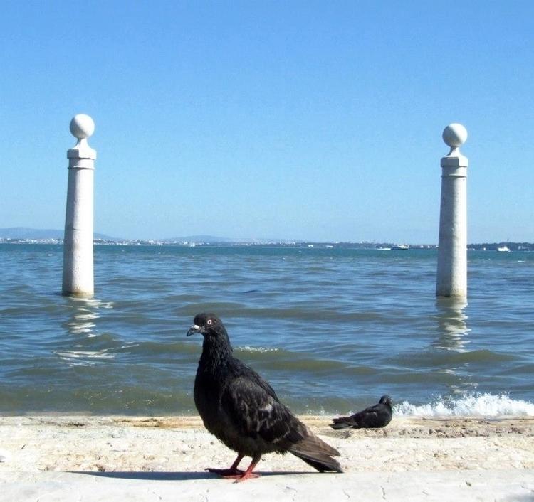 Tejo Lisbon - euric | ello