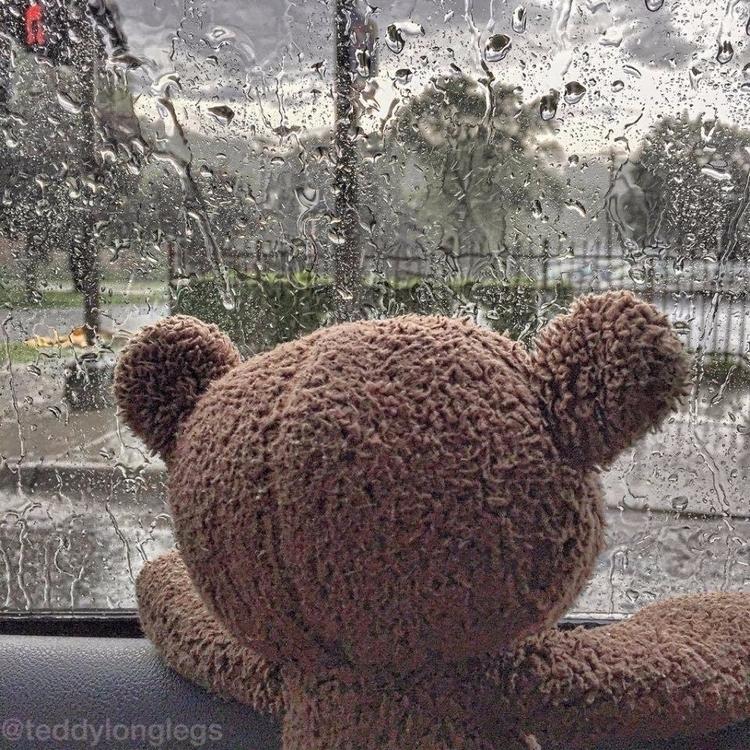 teddylonglegs, brownteddy, rain - teddylonglegs | ello