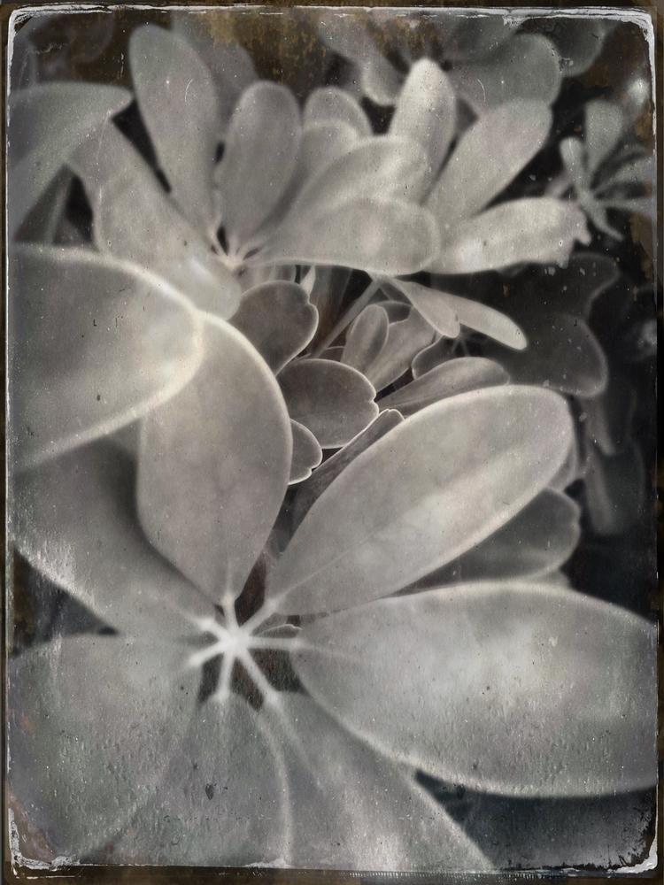 Leaves Backyard Bush Apps - mikefl99 - mikefl99 | ello