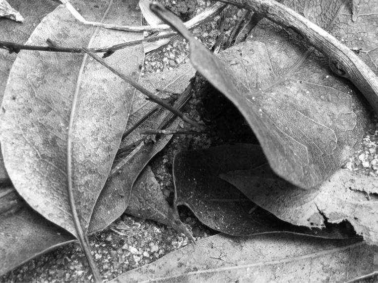 Leaves Apps - mikefl99, ello, ipodphotography - mikefl99 | ello
