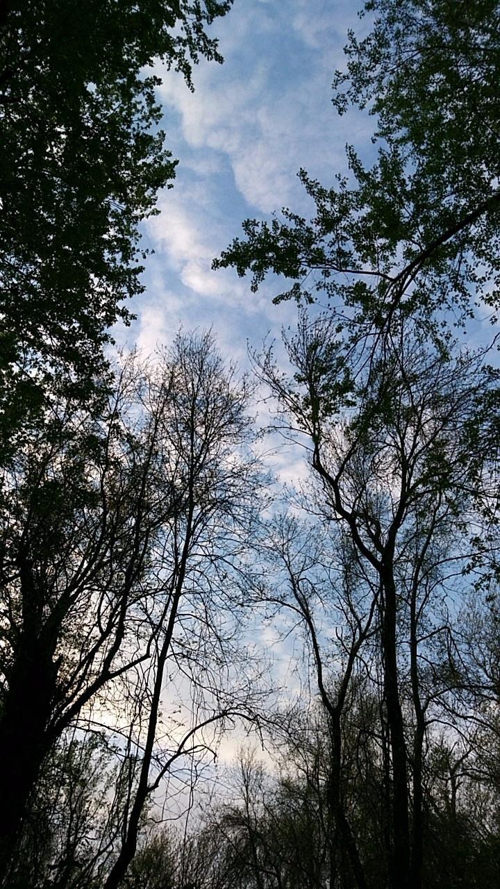photography, forest, sky - captain_p_patches | ello