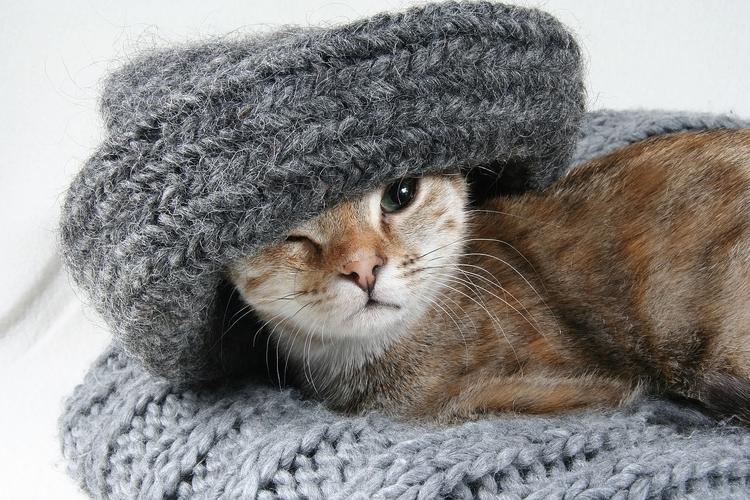 pet, cat, gato, mascotas - petmondo | ello