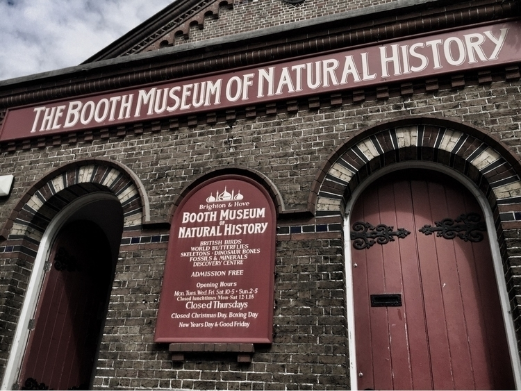 Booth museum natural history - boothmuseum - blackwyrt | ello