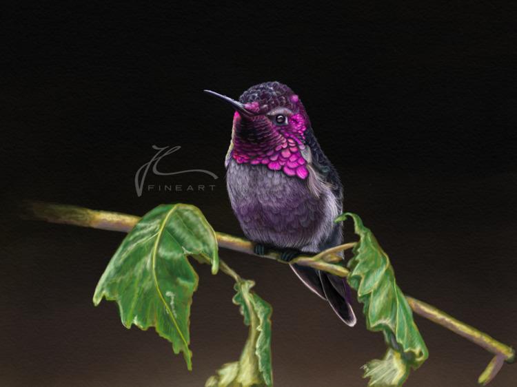 Baby Humming Bird. enjoyed pain - j-l-fineart | ello