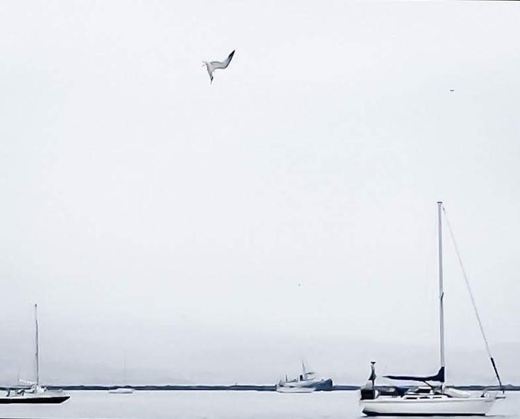 Elegant Tern - artbycjross, boatlife - cjthepainter   ello