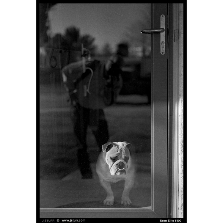 Lola - English Bulldog - film, ilford - jsturr | ello