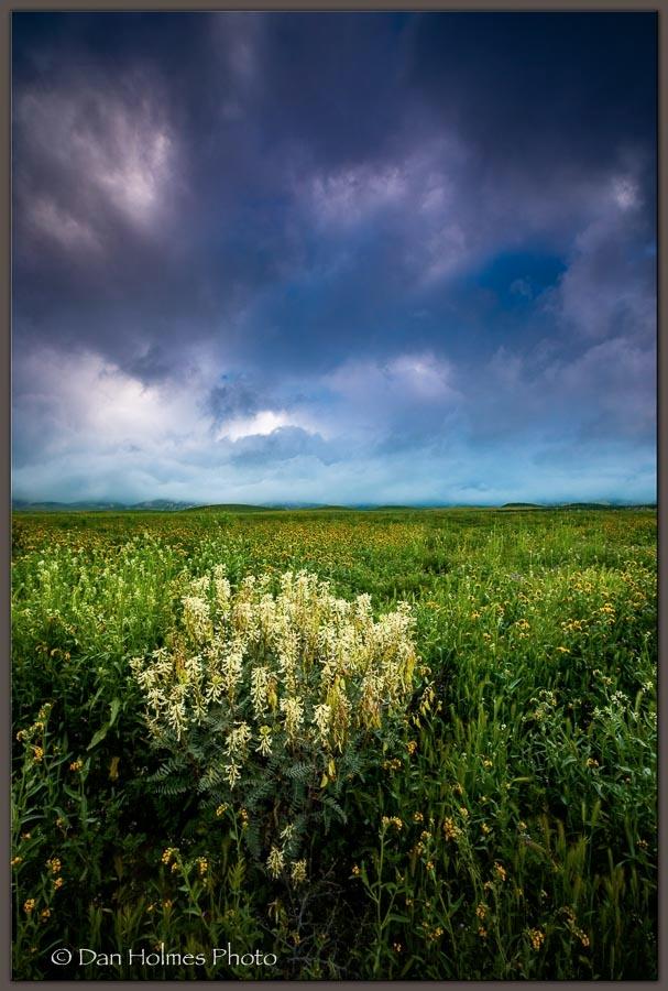 Morning Carizzo, Carizzo Plain  - danholmesphoto | ello
