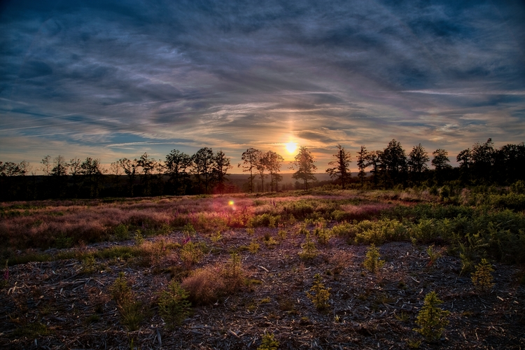 Sunset wild - sunset, sunrise, nature - infectioos   ello
