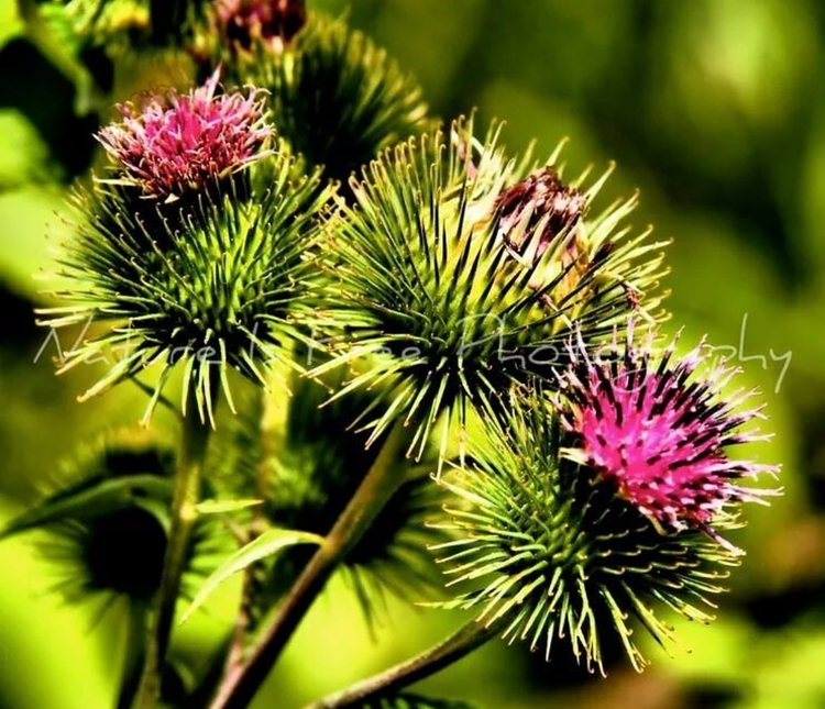 People planet flowers mad joy t - natureisfree | ello