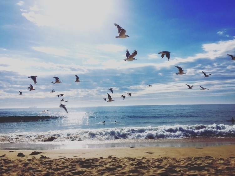 Seagulls swimming summer - elkemichelle | ello
