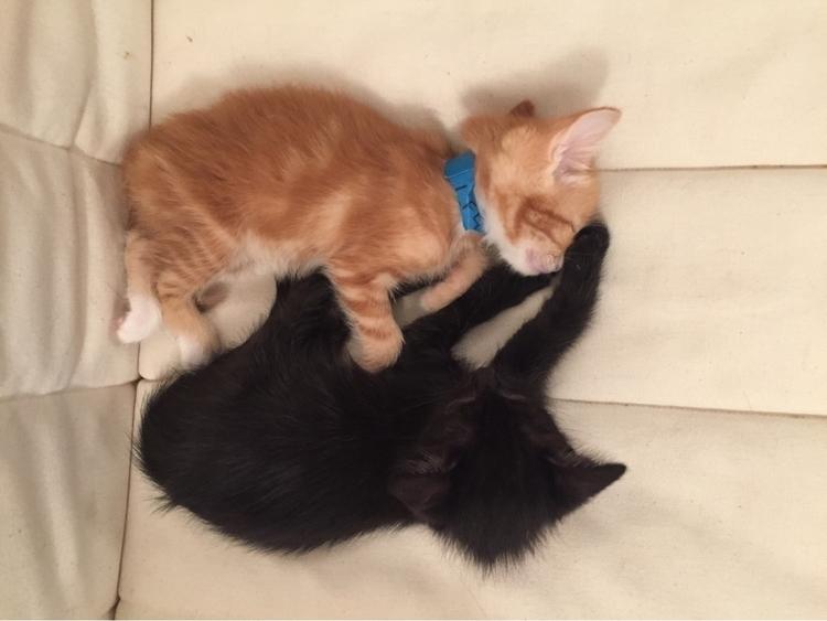 Weekend forecast: Kittens - nagnagnag | ello