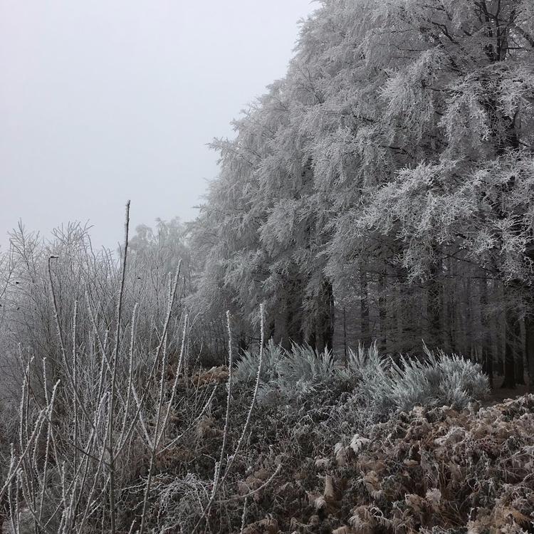 Winter landscape II, photograph - nothingeverythingbutdesign | ello