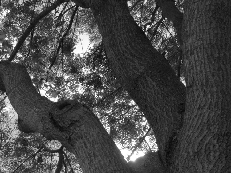 Backyard Tree Apps - mikefl99, ello - mikefl99 | ello