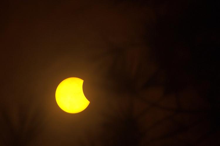 Eclipse. Francis Marion Nationa - vujadav17   ello