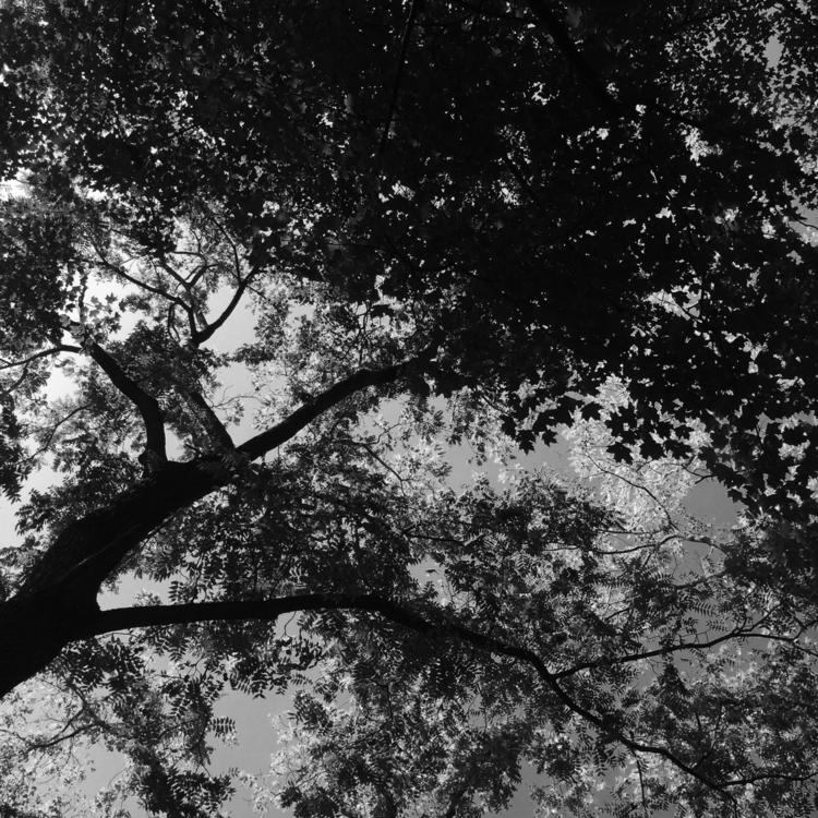 trees sheltering keeping safe r - crystaltruths | ello