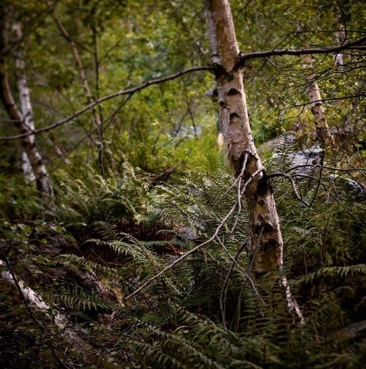 Alpine Flora // Ticcino, border - deathysmile | ello