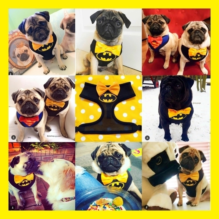 amazing Batpug customers world  - homeiswherethepugis | ello