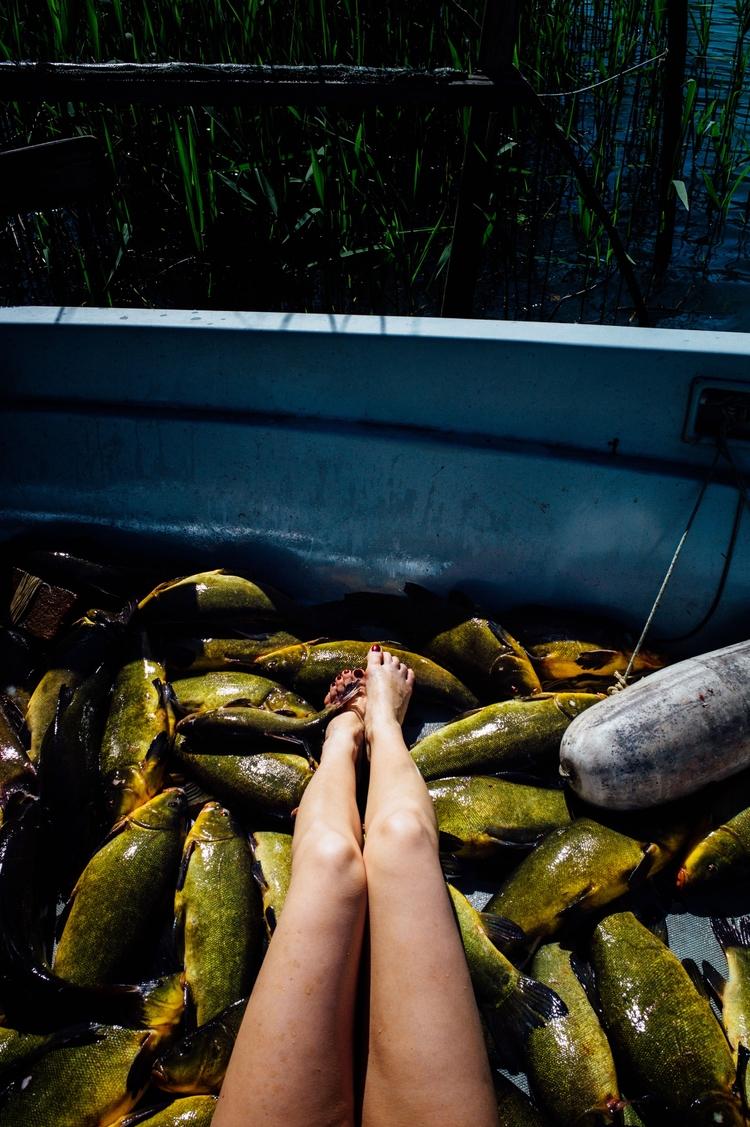 Fish Shout Andrea born Gravedon - acomalini | ello