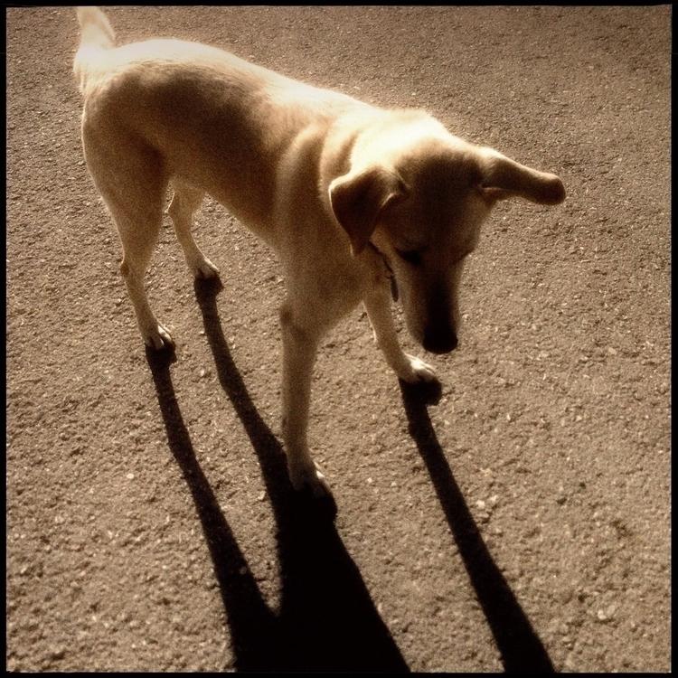 Simon walk countryside - 39. - danhayon | ello