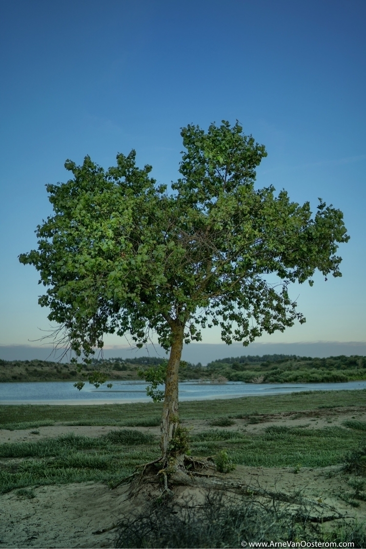 National Park Zuid Kennemerland - arnevanoosterom | ello