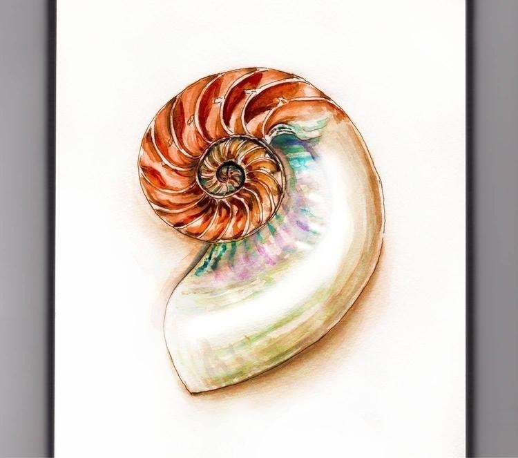- Day 13 Favorite Shell - WorldWatercolorGroup - doodlewash   ello