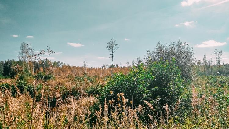 2017 - horizon, sky, nature, lithuania - beheroght   ello