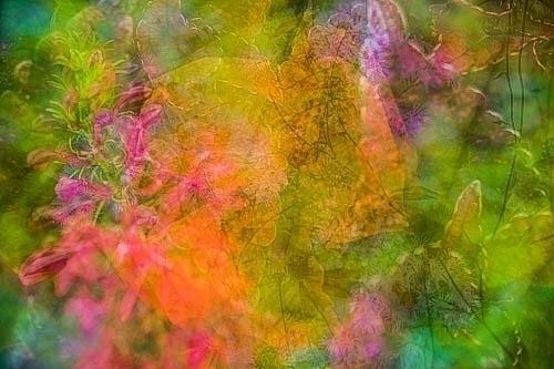 Multiple exposure, flower photo - liamchopp | ello