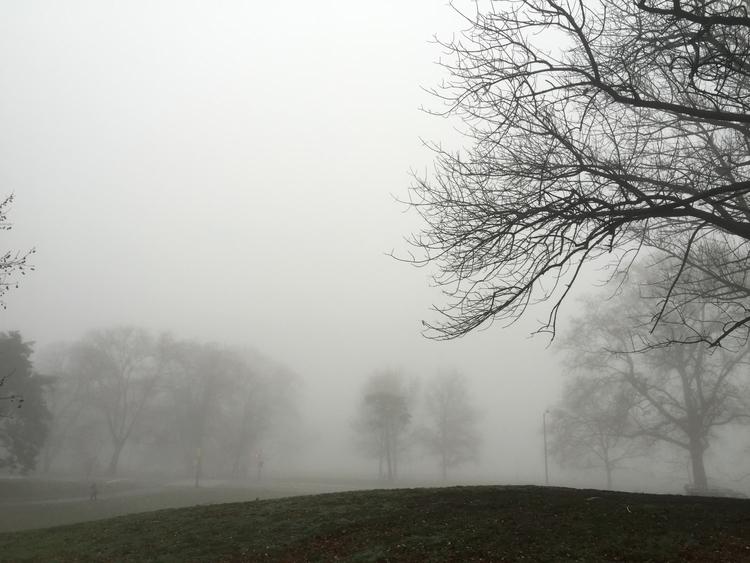 park, fog, trees - lisaly16 | ello