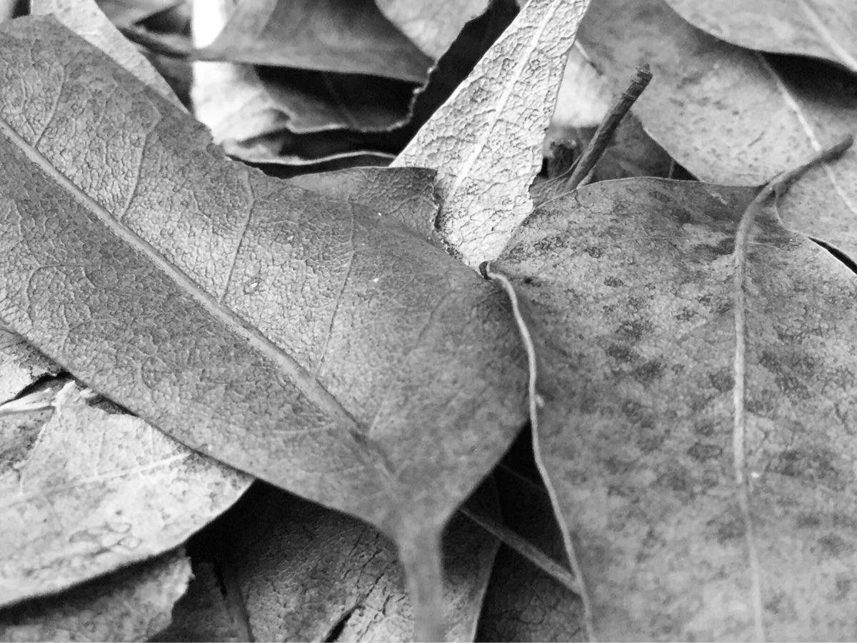 Leftovers Leaves Fall Season Ap - mikefl99 | ello