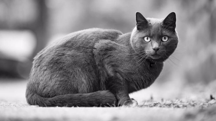 Los gatos su impresionante cone - codigooculto | ello