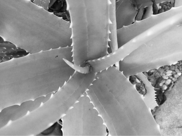 Aloe Plant Growing Pot Apps htt - mikefl99   ello