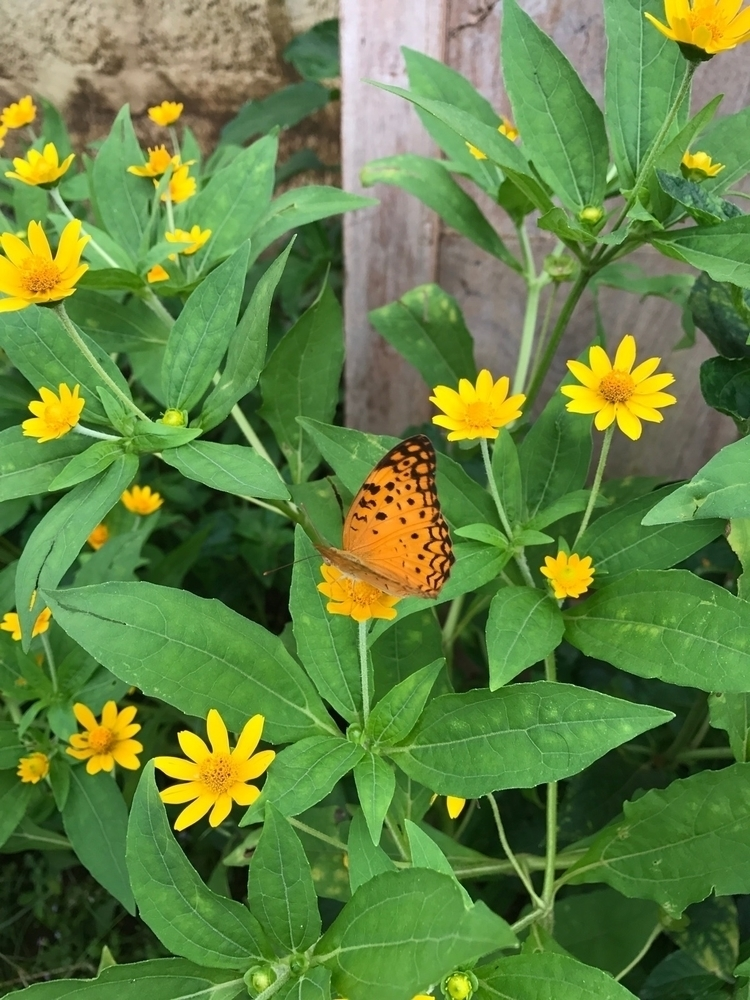 butterfly - hasiakbar | ello