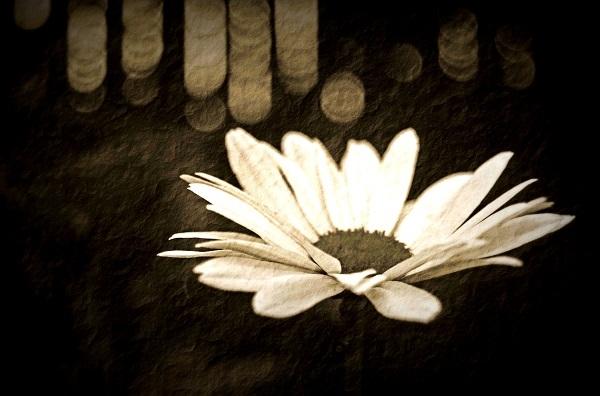 °°° - melankomikerin, photography - melankomikerin   ello