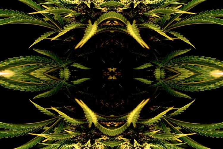 cannabis, inspired, cannaculture - offclark | ello