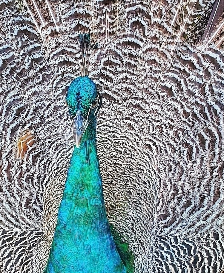Fascinating Creatures - wildlife - francesco_shank   ello